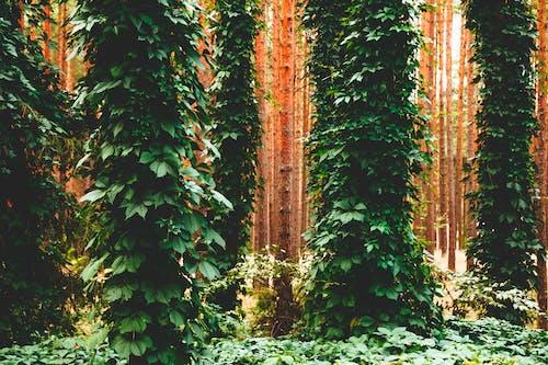 Kostenloses Stock Foto zu bäume, blätter, draußen, efeu