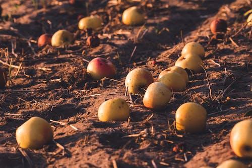 Ingyenes stockfotó darált, élelmiszer, farm, földművelés témában
