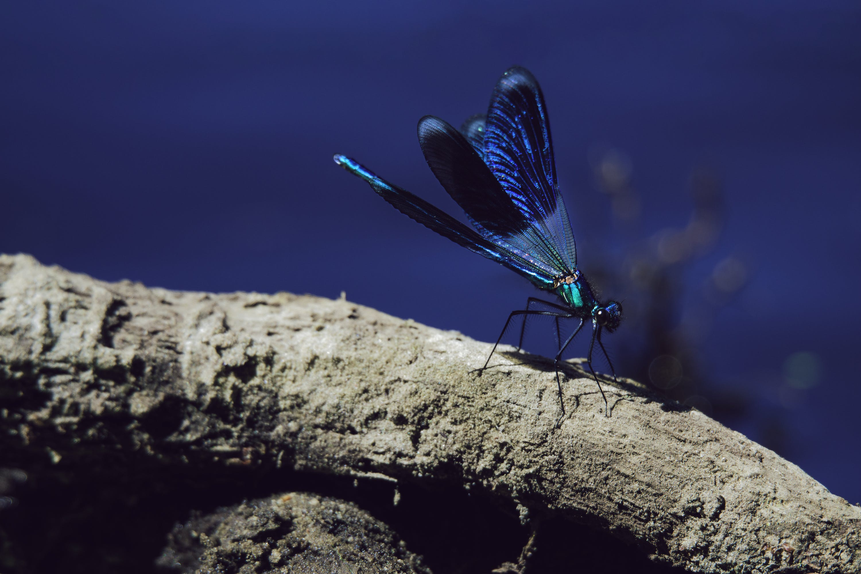 Selective Focus Photography of Blue Damselfly Perched on Brown Tree Branch