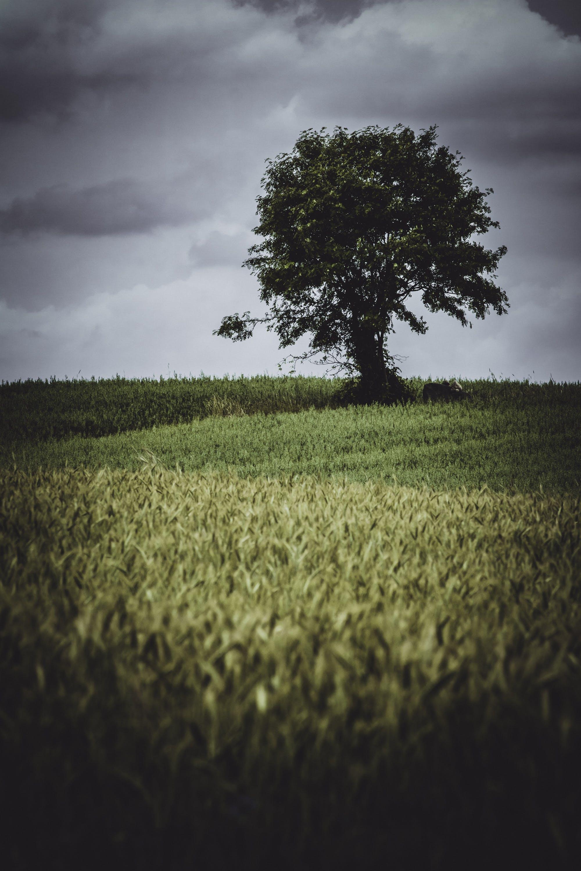 Gratis stockfoto met akkerland, boerderij, boerenbedrijf, boom