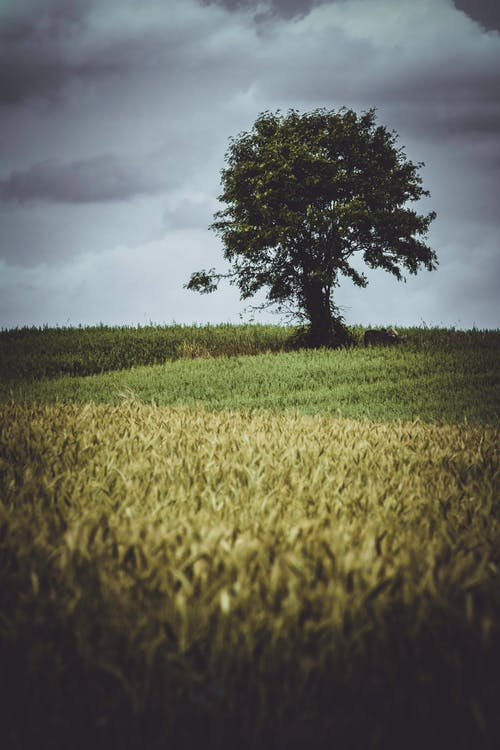 activități agricole, agricultură, arbore