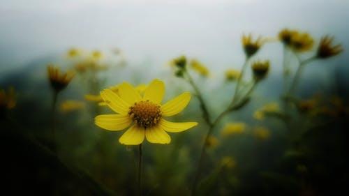 Free stock photo of background, blur, flower, flowerbed