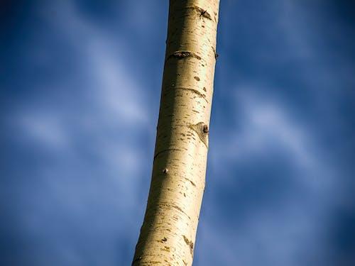 คลังภาพถ่ายฟรี ของ ขาว, ท้องฟ้า, ท้องฟ้าสีคราม, ธรรมชาติ
