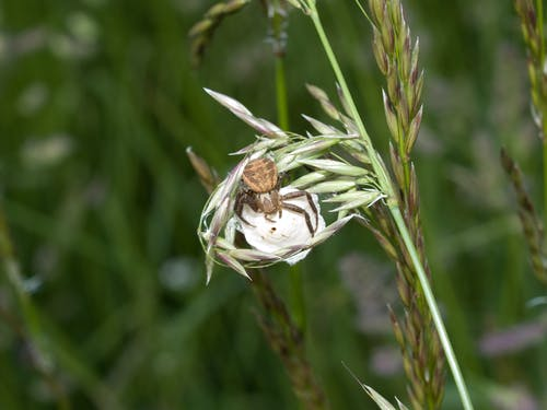 Foto profissional grátis de animal, aranha, aranha-saltadora, close