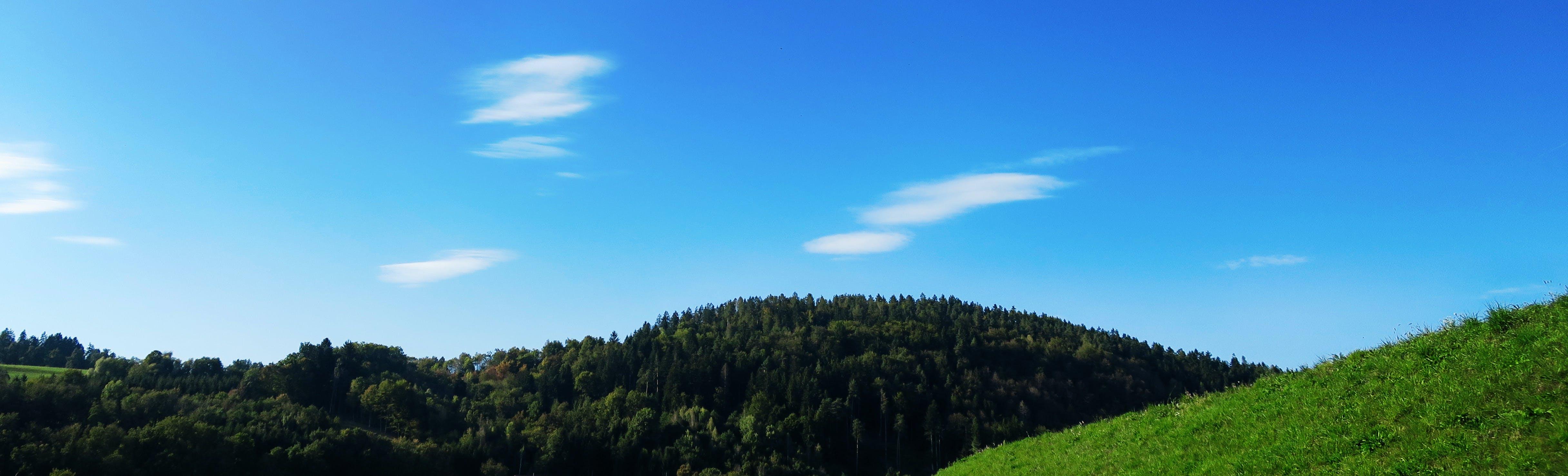 Fotos de stock gratuitas de árbol, azul, blanco, bosque
