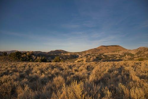 Imagine de stoc gratuită din arbori, câmp, cer, fotografie cu natură