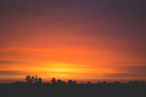 オレンジ色の空, バックライト付き, 夜明け, 木の無料の写真素材