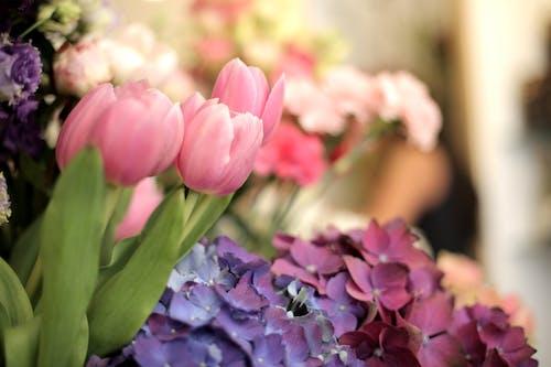 Δωρεάν στοκ φωτογραφιών με κατάστημα, λουλούδι, τουλίπα, χρώμα