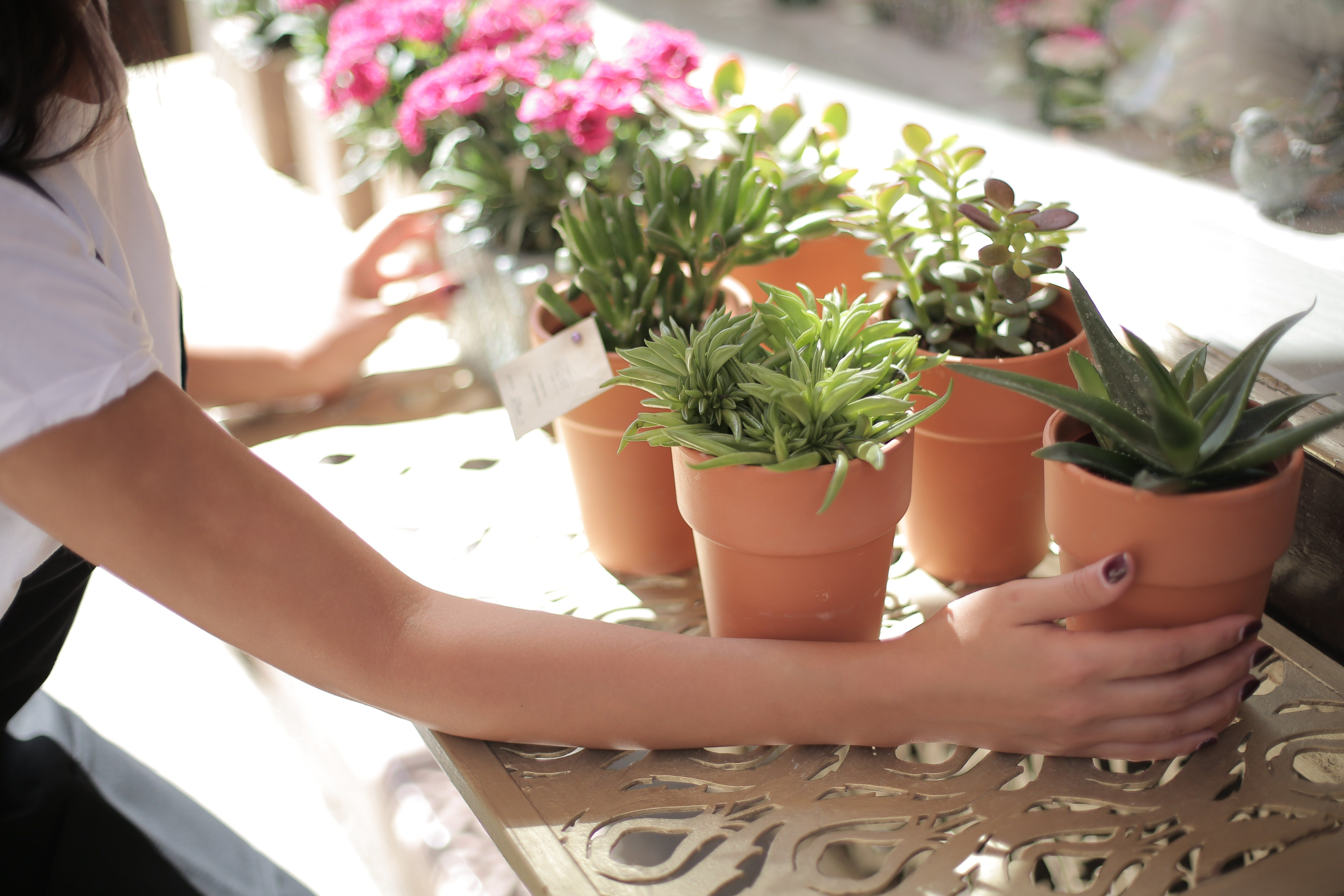 Woman Holding Green Leafed Plant on Pot