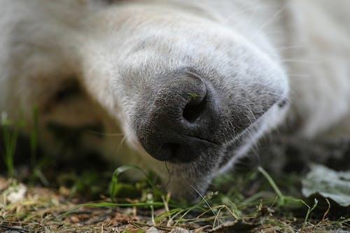 Foto d'estoc gratuïta de adorable, animal, bufó, cadell