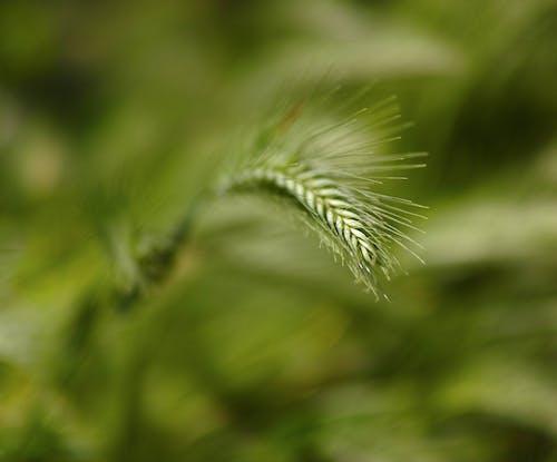 Gratis lagerfoto af close-up, farverig, grøn, miljø
