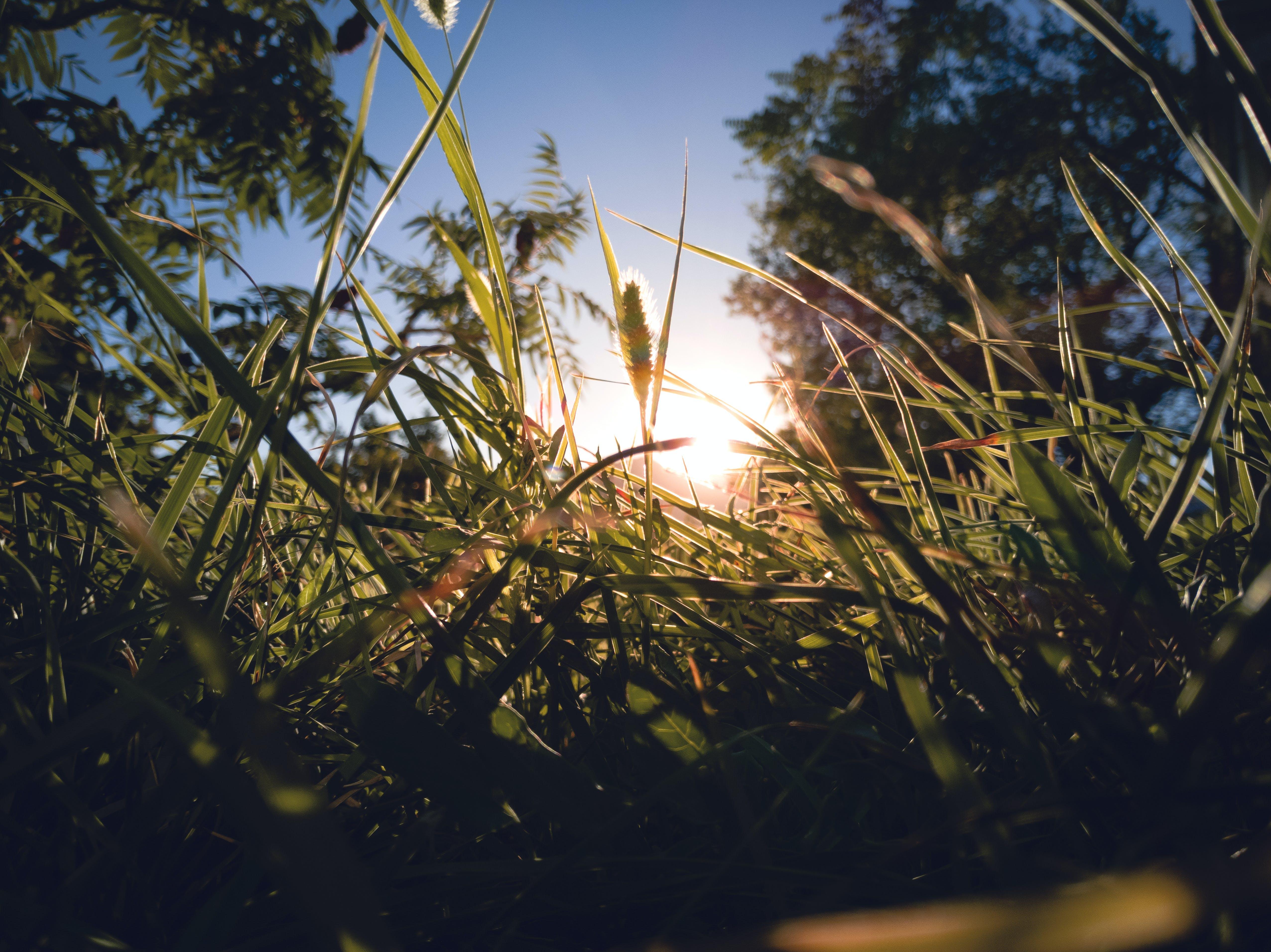 Grass Near Trees