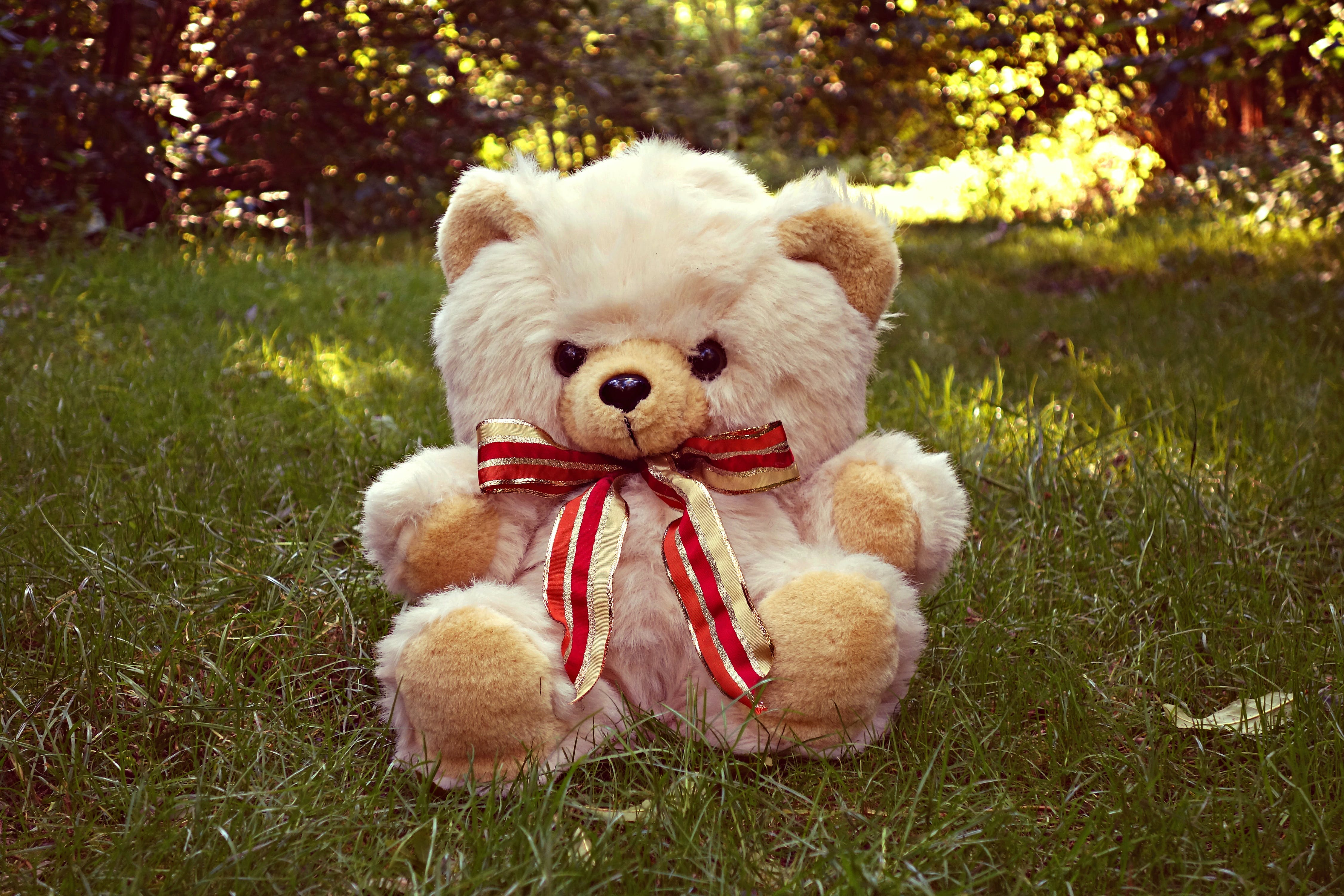 Free stock photo of adorable, bear, comfort, cuddly toy