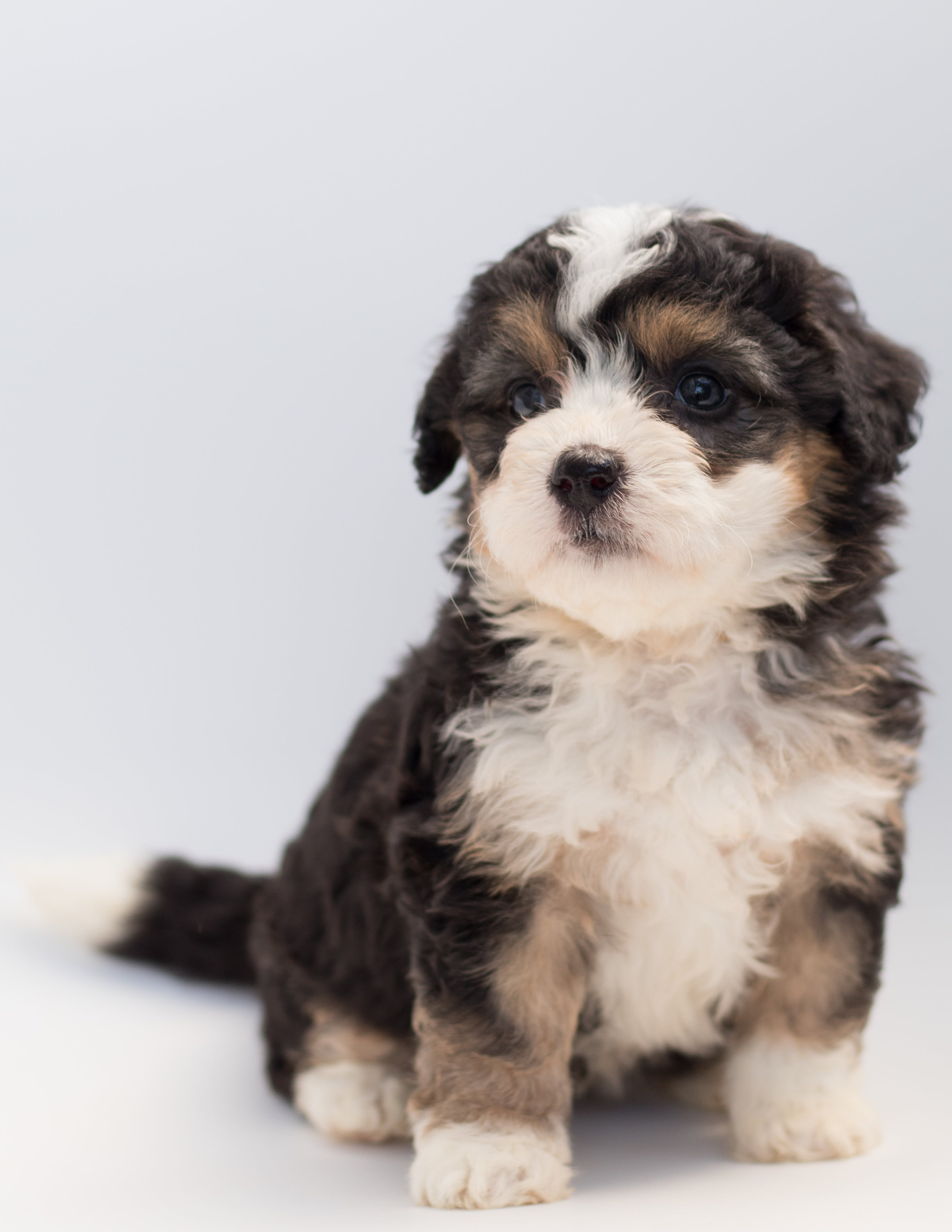Close-Up Photo of Sitting Puppy