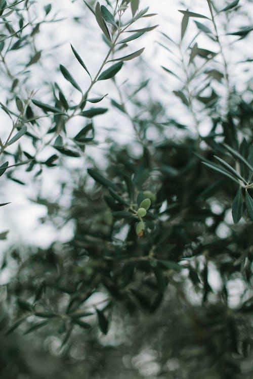 açık, ağaç, alan derinliği