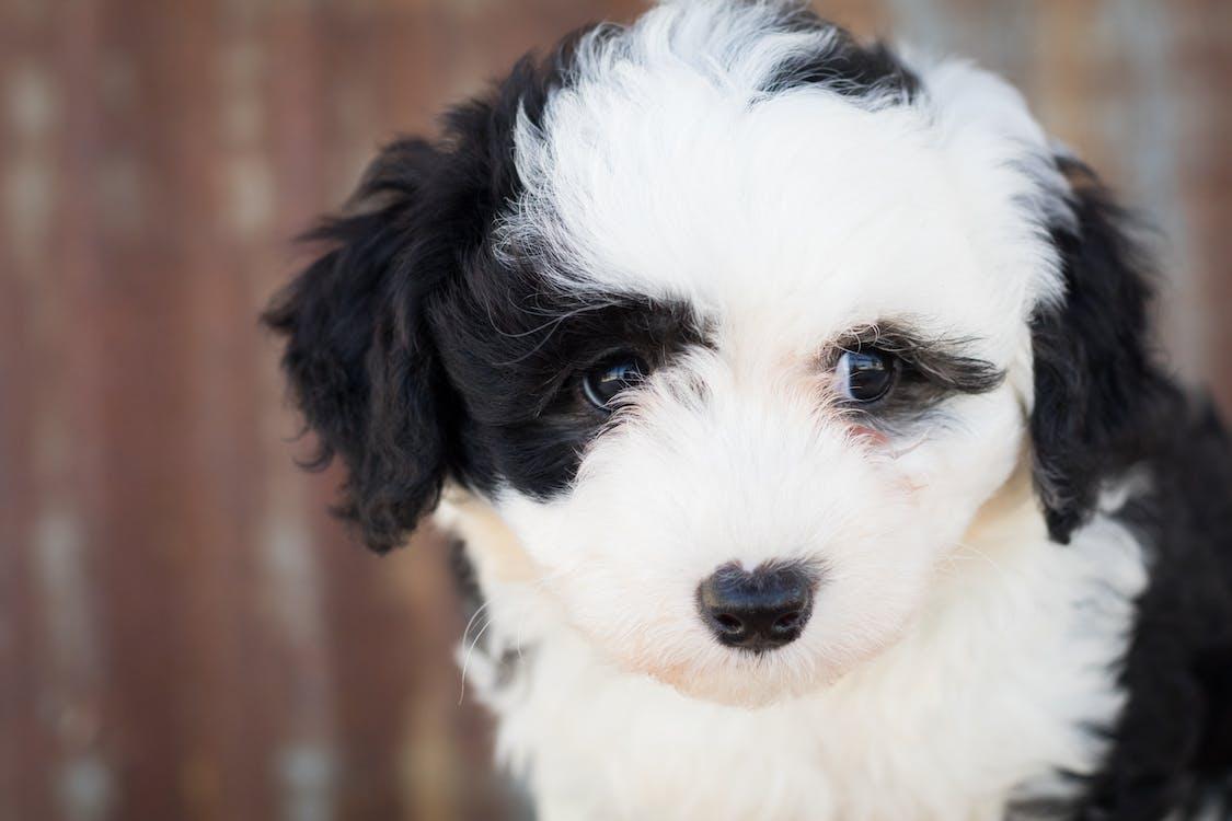 adorable, animal, animal domestico