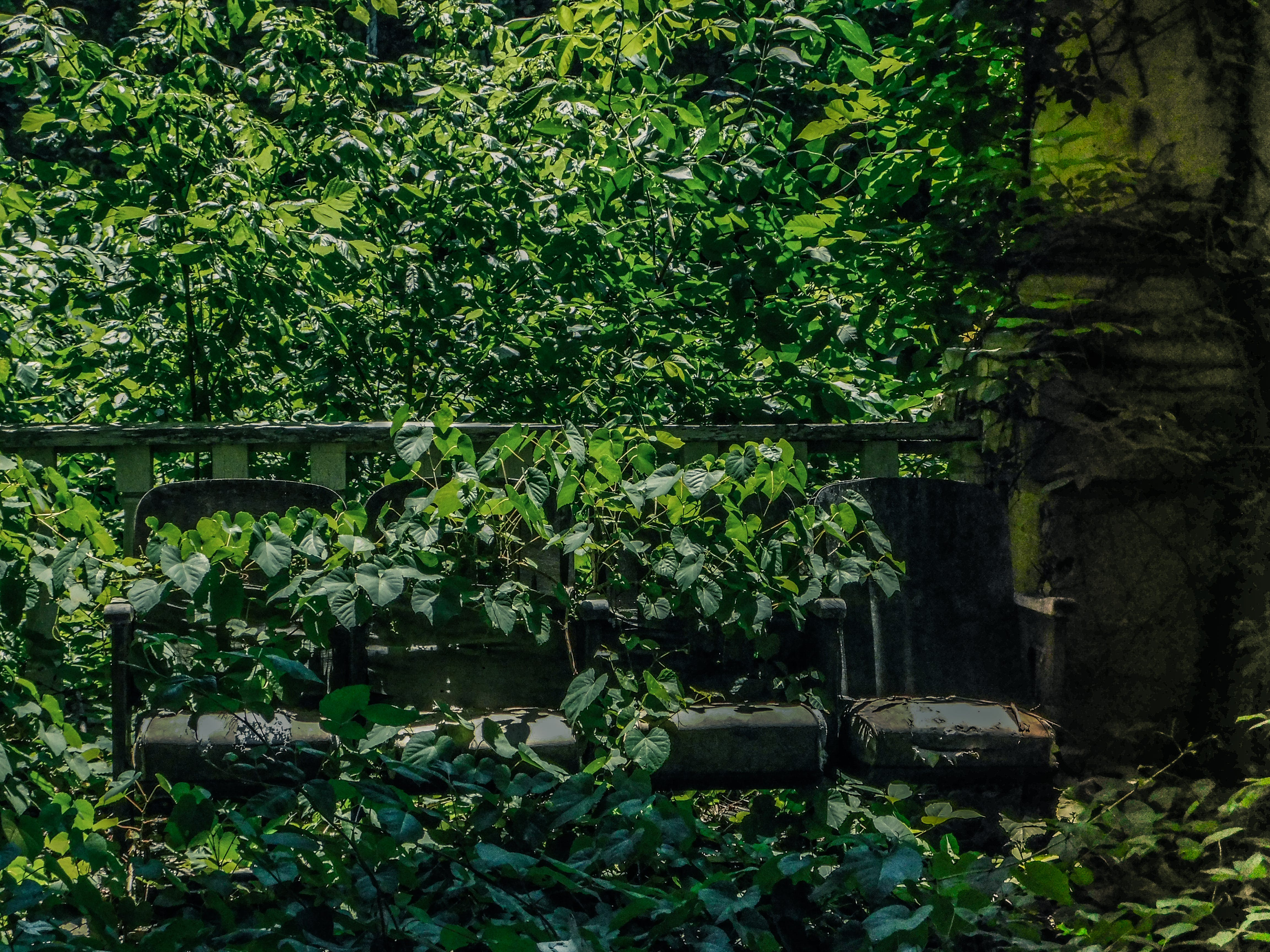 Free stock photo of abandoned building, ivy, rust, seats
