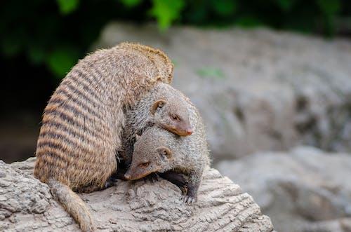 動物, 原本, 宏觀 的 免費圖庫相片