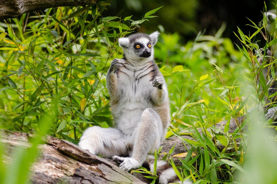 Foto stok gratis alam, binatang, bulu