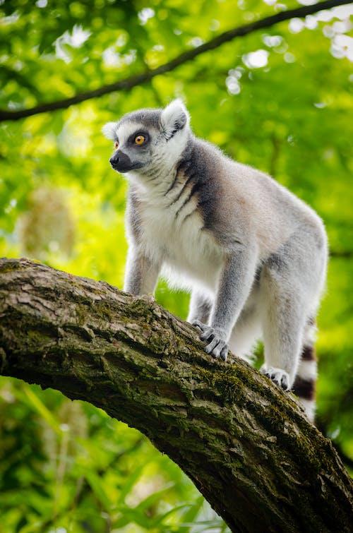 Ingyenes stockfotó állat, állatfotók, emlős, fa témában