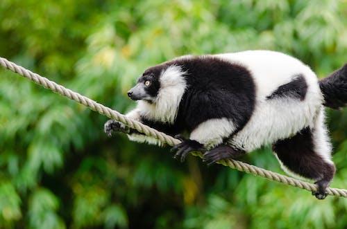 Ảnh lưu trữ miễn phí về cận cảnh, chụp ảnh động vật, con vật, dây thừng