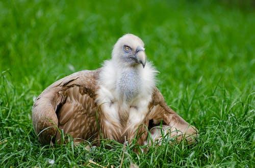 çim, hayvan, kuş tüyleri, vahşi yaşam içeren Ücretsiz stok fotoğraf