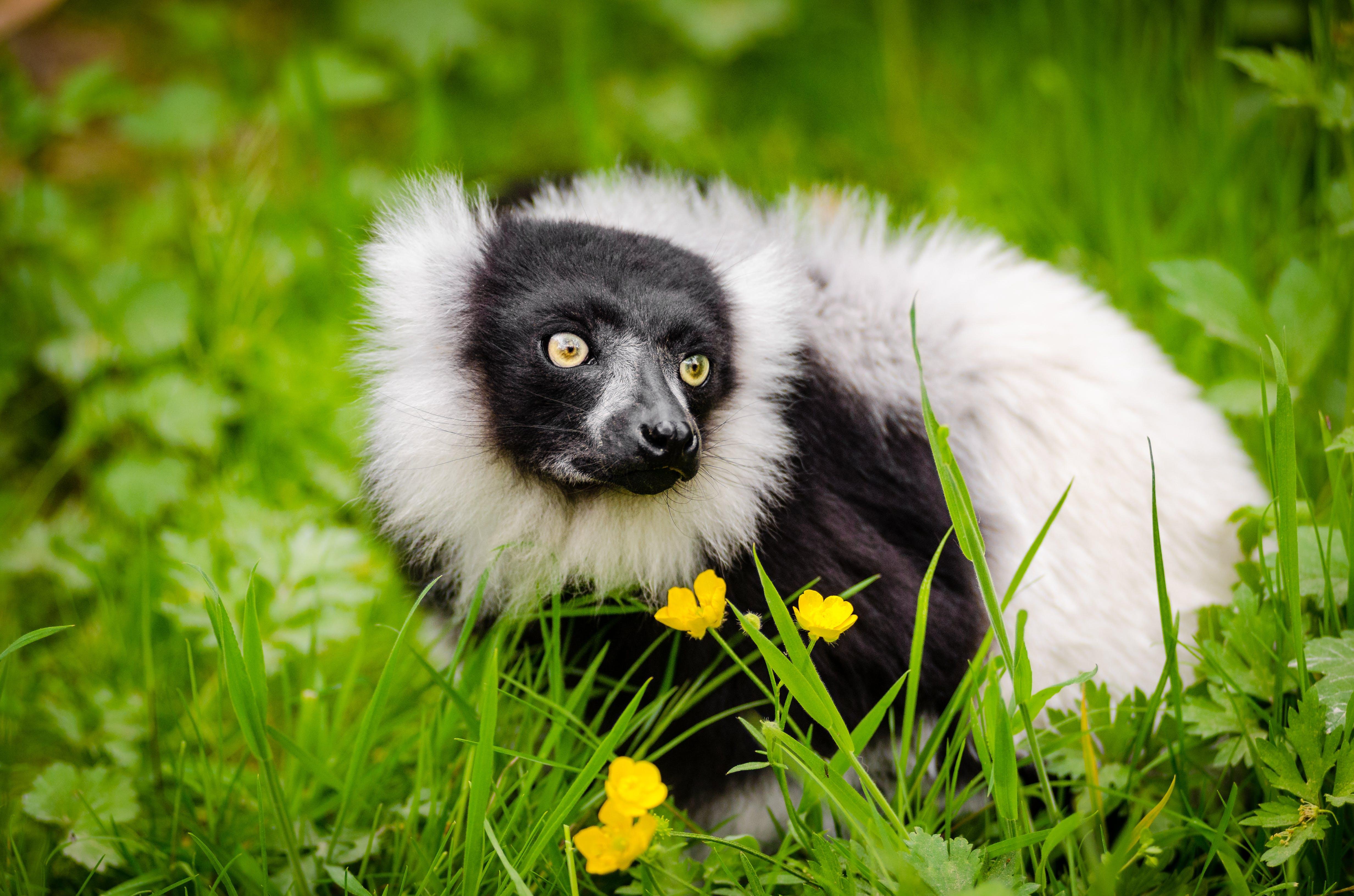 White and Black Long Coated Animal