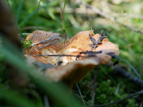 Kostenloses Stock Foto zu natur, pilz, wald, wildnis