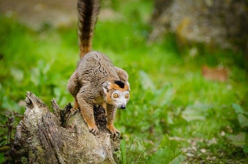 Základová fotografie zdarma na téma dívání, divoké zvíře, dřevo, fotografování zvířat