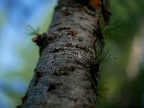 Gratis lagerfoto af fyrretræ, grøn, makro, mørk
