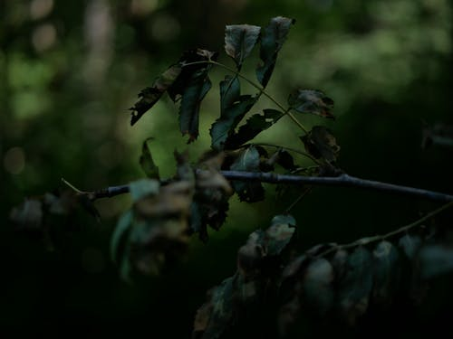 Gratis lagerfoto af grøn, mørk, natur, skov