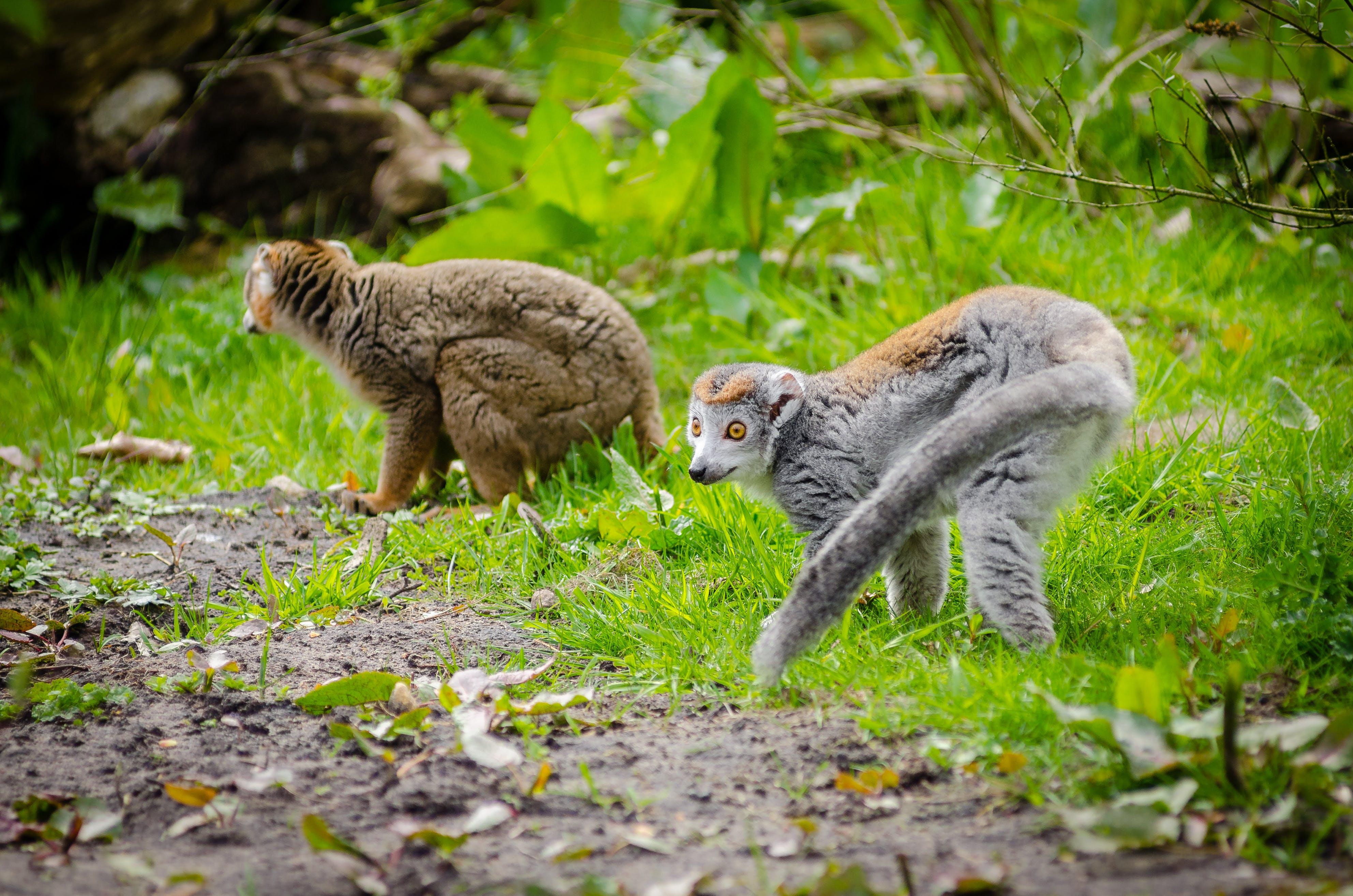 Foto stok gratis berbulu, binatang, bulu, cute