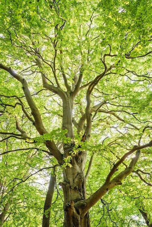 Foto profissional grátis de ao ar livre, árvore, aumento, brilhante
