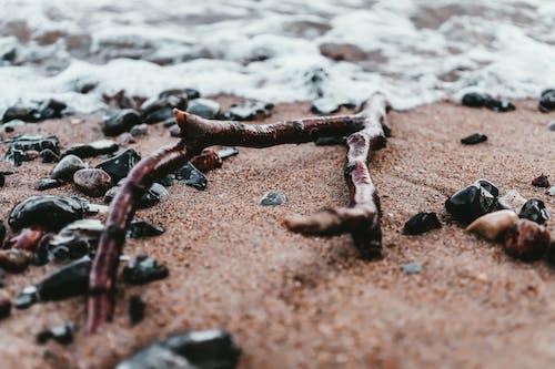 Foto profissional grátis de água, areia, beira-mar, cênico
