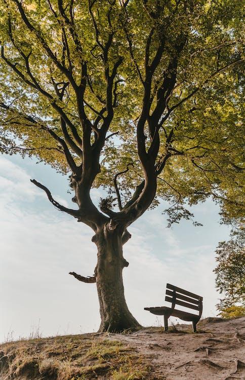 ветви, дерево, дневной свет