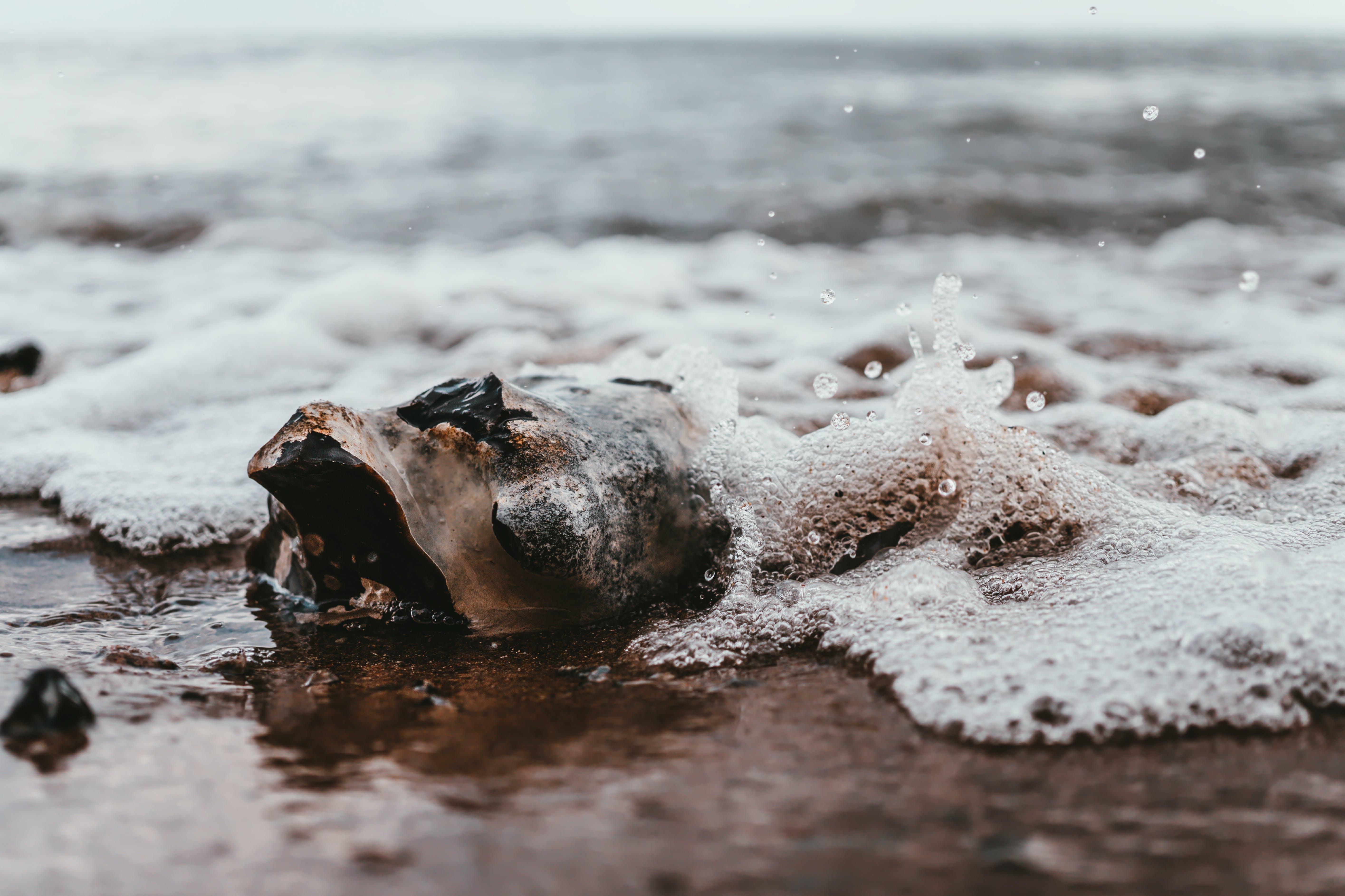 Seashell on Shore