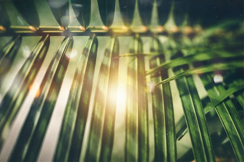 Selective Focus Photography of Green Palm Tree Leaves
