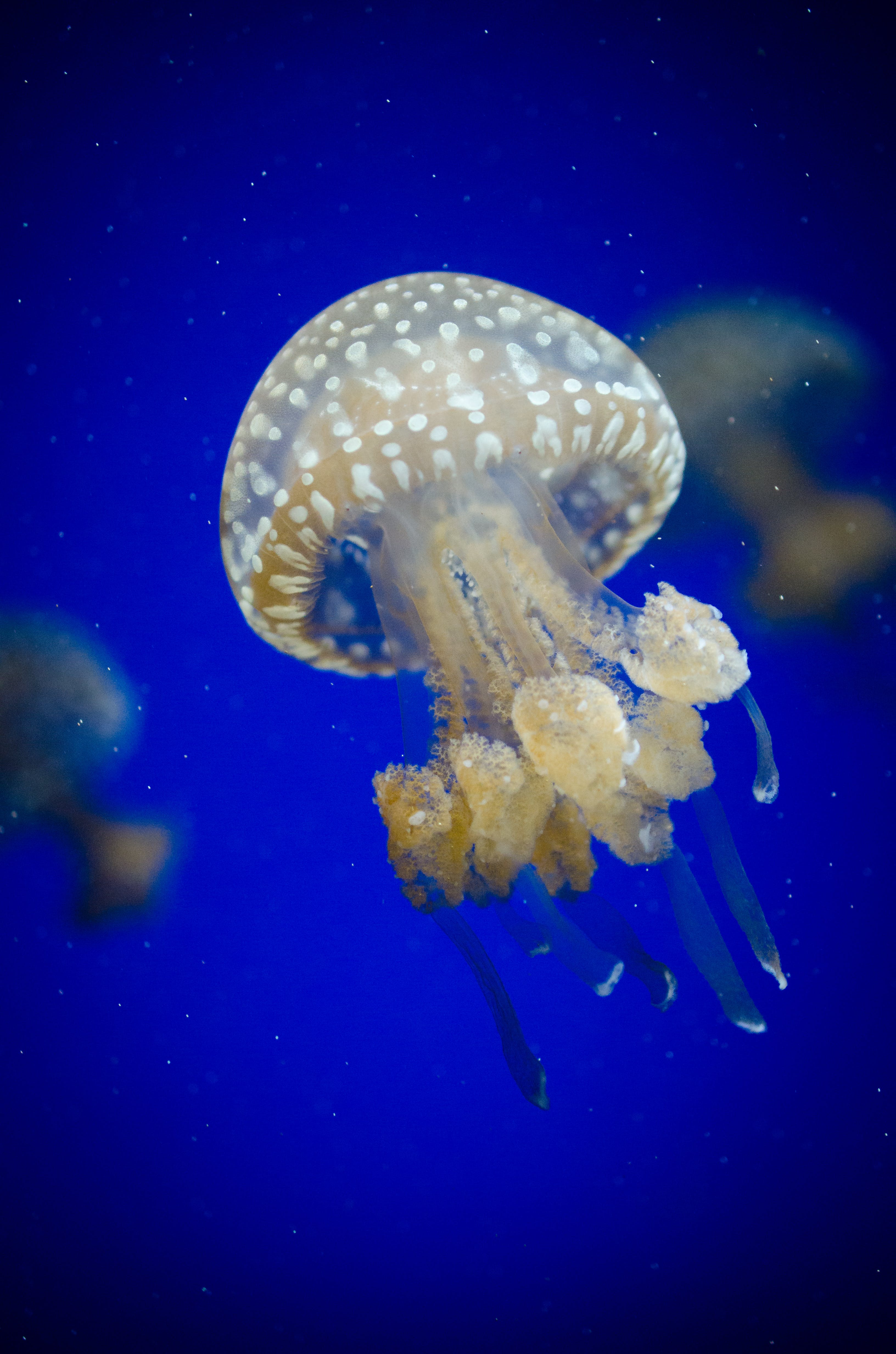 White Jelly Fish on Water