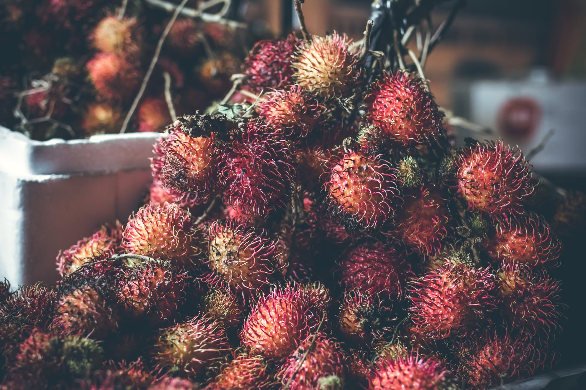 Rambután fruto