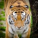 nature, animal, blur