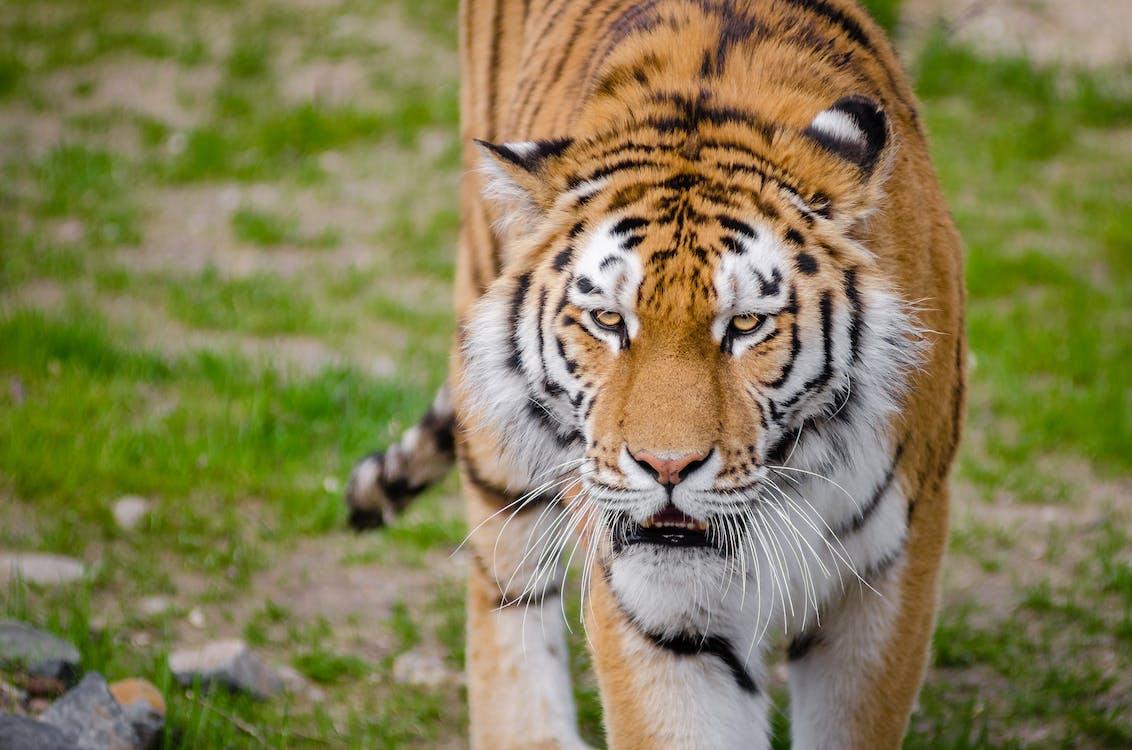 djur, djurfotografi, vilda djur och växter