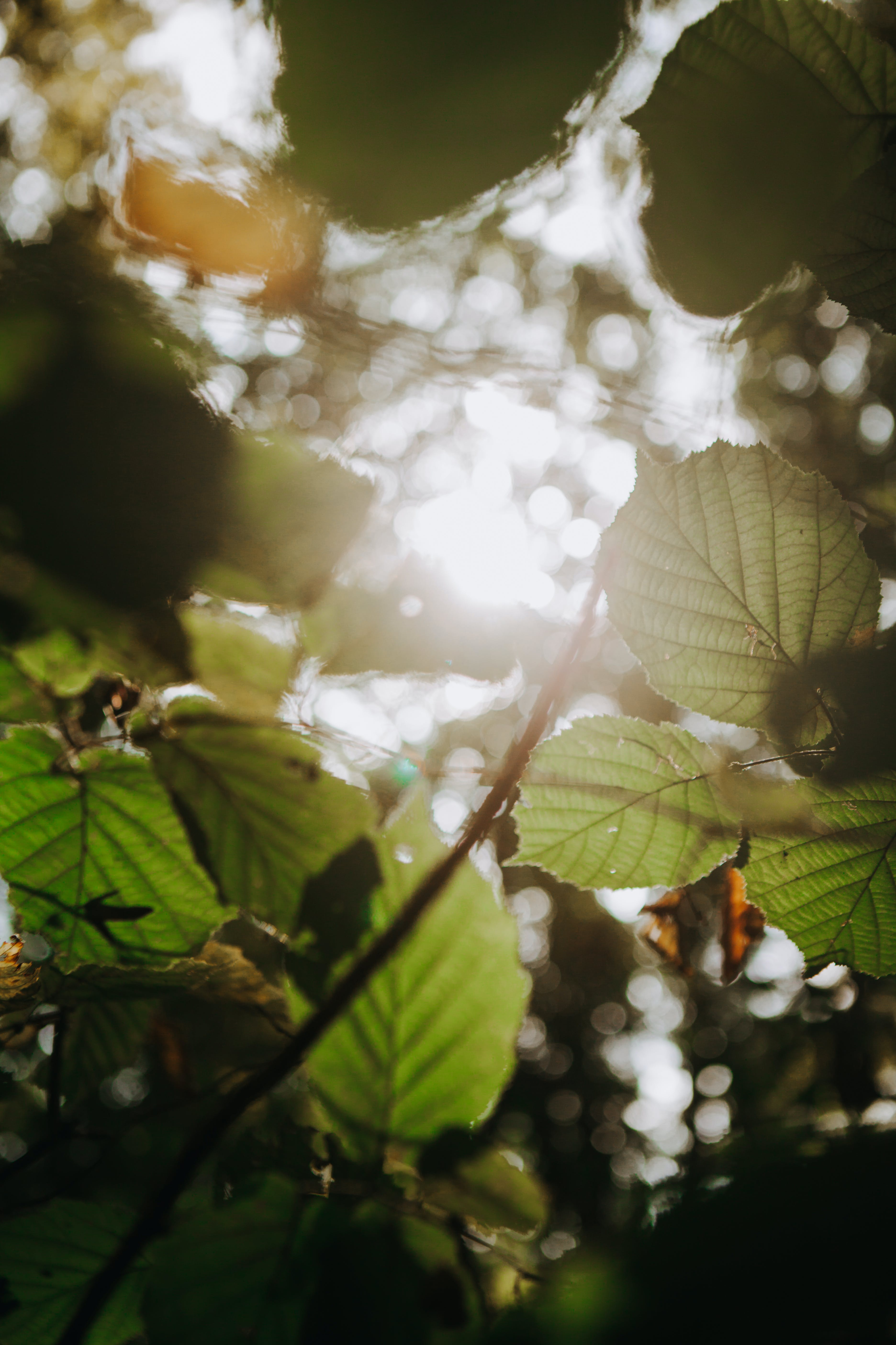 Darmowe zdjęcie z galerii z drzewa