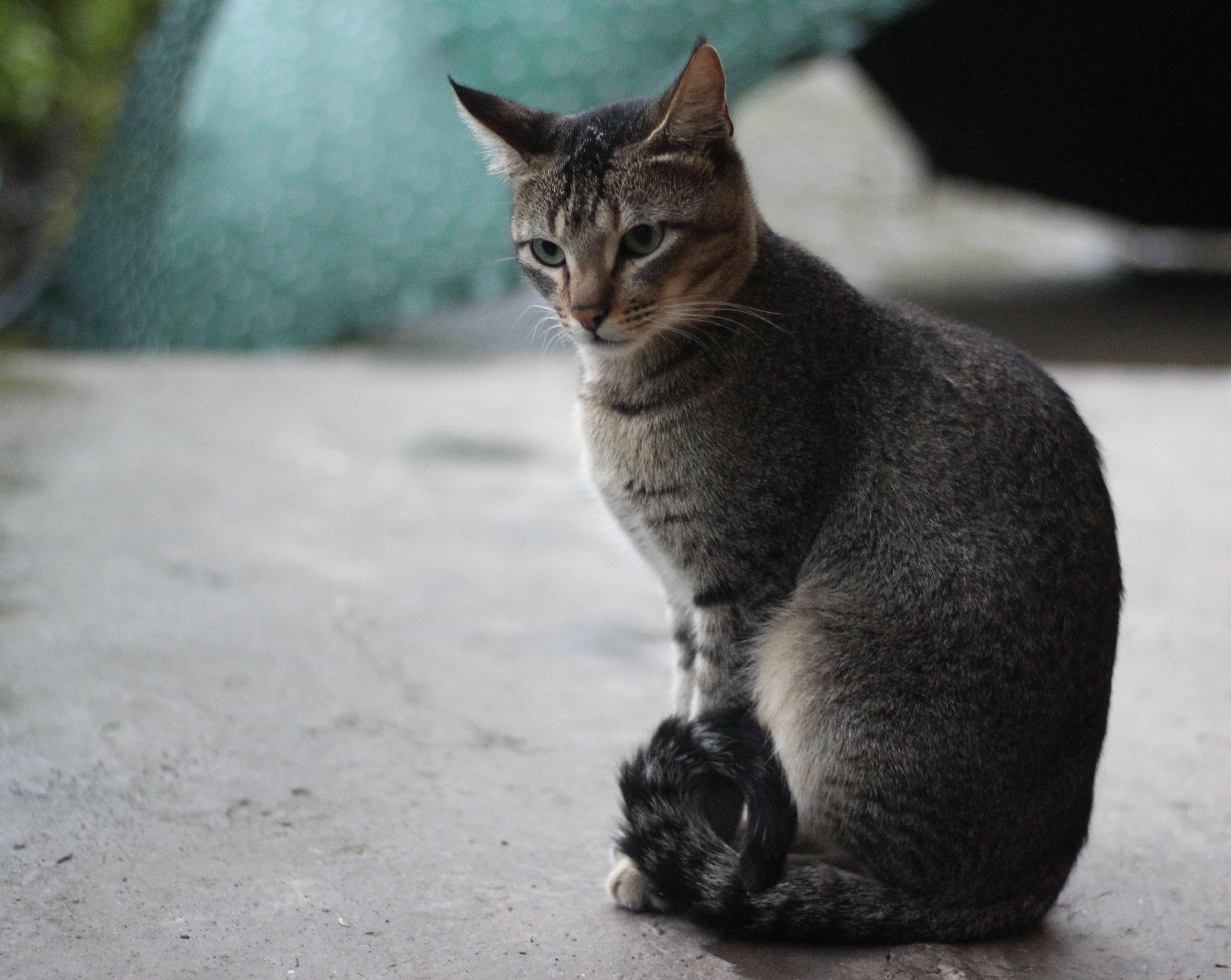 Free stock photo of cat, cat face, cute animals