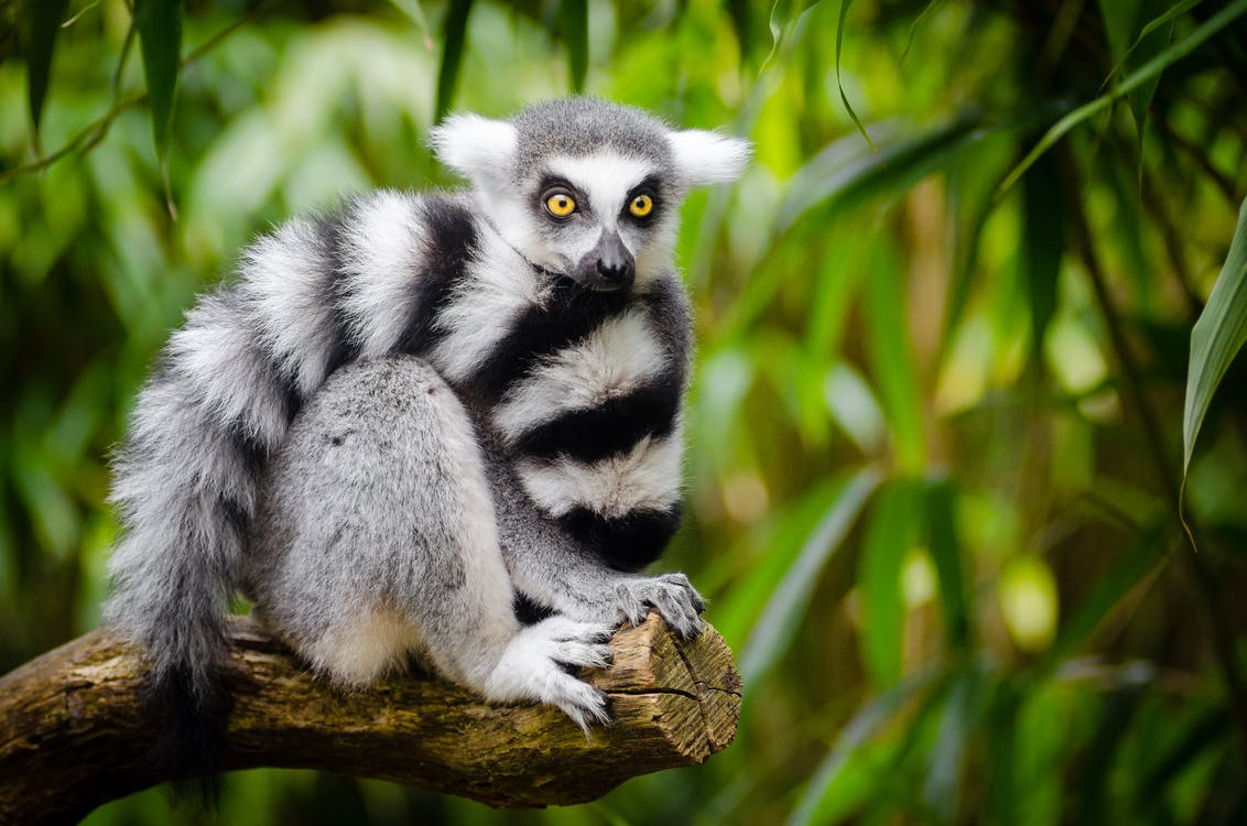 White and Black Animal Sitting on a Branch