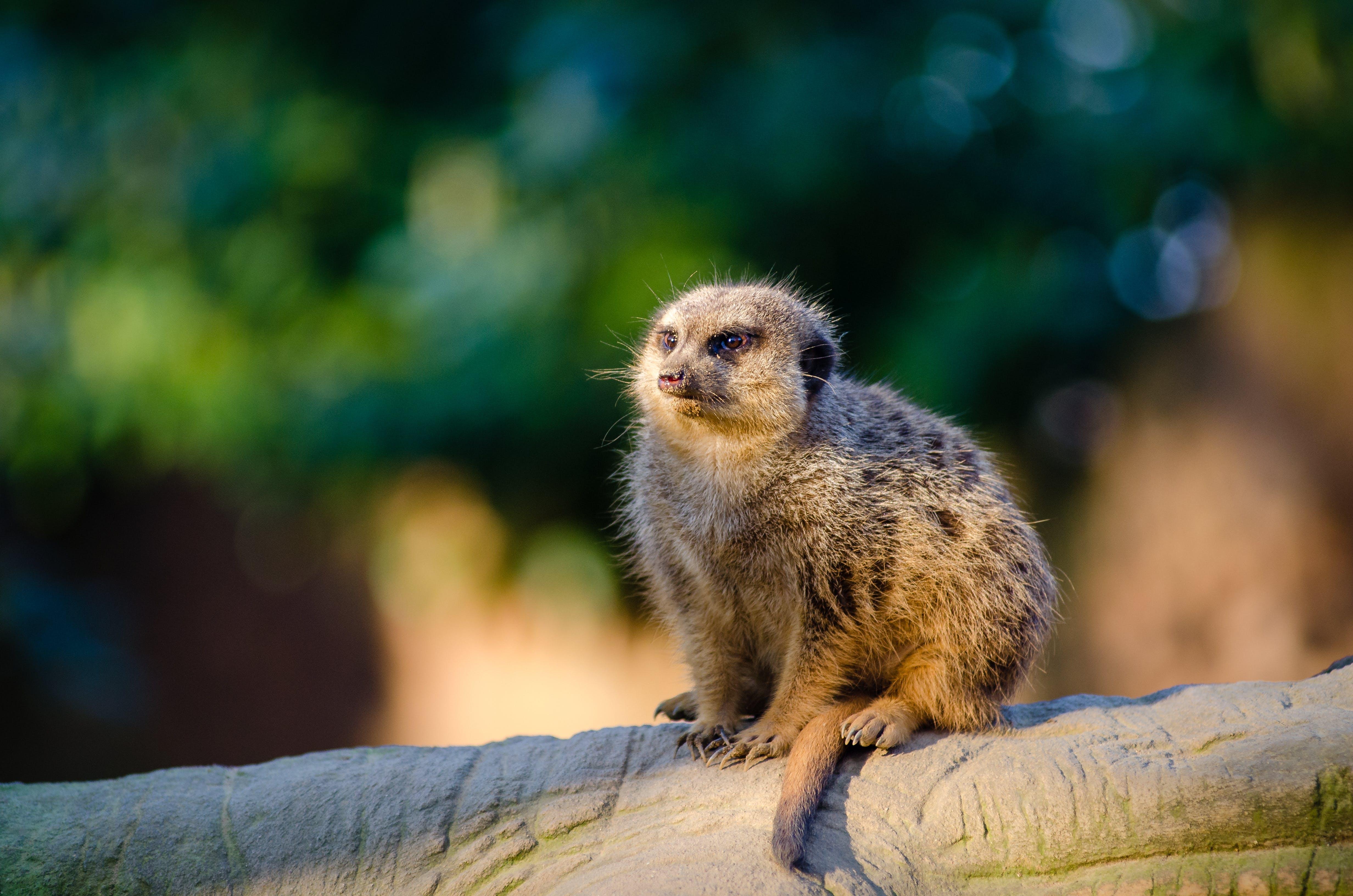Gratis lagerfoto af close-up, dyr, dyreliv, gren