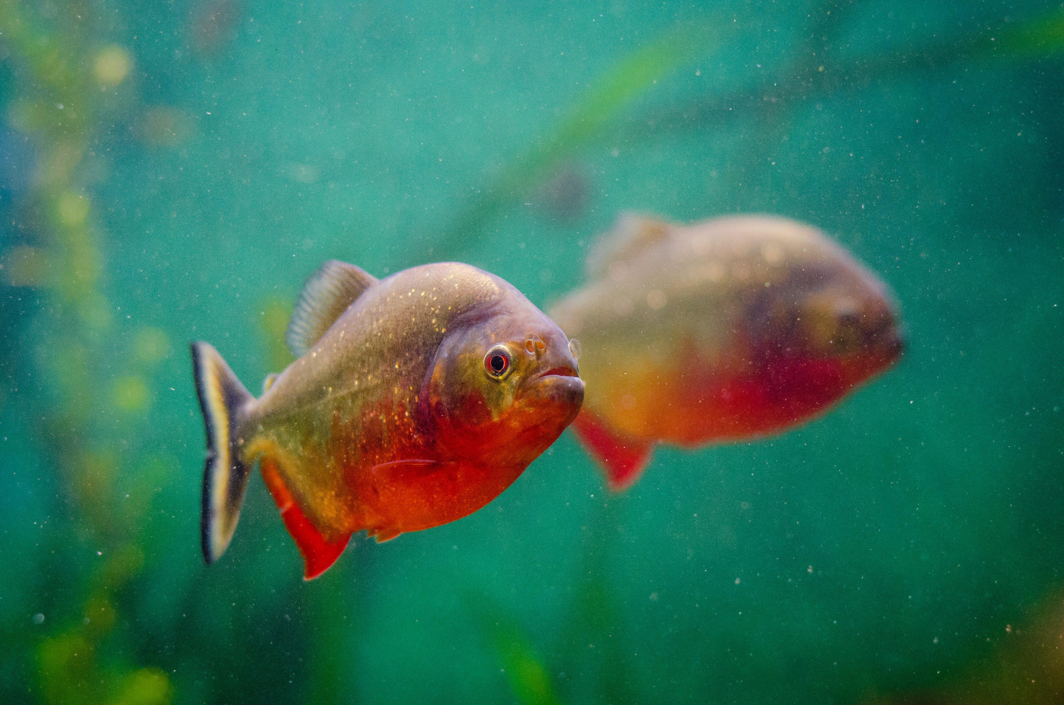 Immagine gratuita di acqua, acquario, animale, nuotare
