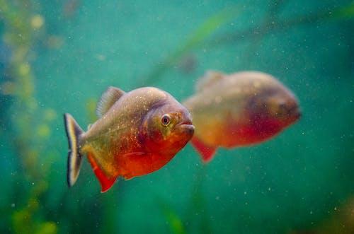 Základová fotografie zdarma na téma akvárium, odraz, plavání, podvodní