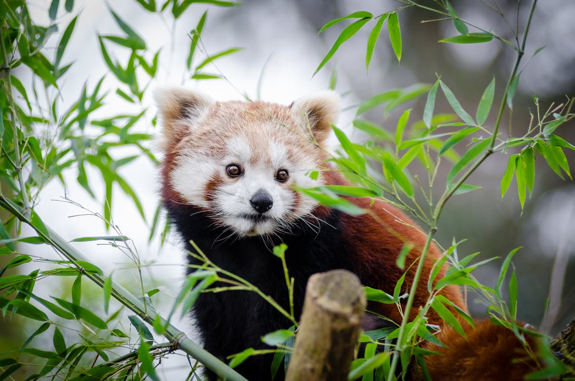 Brown and White Bear on Bamboo Tree