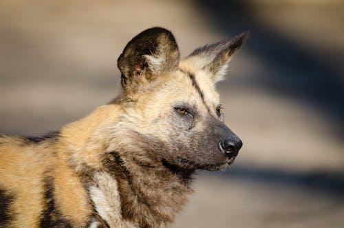 Fotobanka sbezplatnými fotkami na tému domáce zviera, pes, psovitá šelma, roztomilý