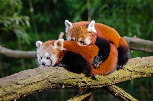 Foto stok gratis alam, berbulu, binatang, bulu